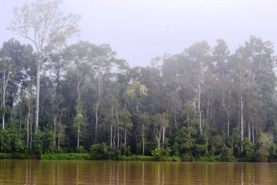 Our misty morning safari along the Kinabatangan