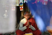 A Monk captured between flags, deep in prayer.