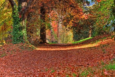 Coloured path