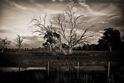 B-W Tree and Dam