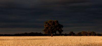 fields 7