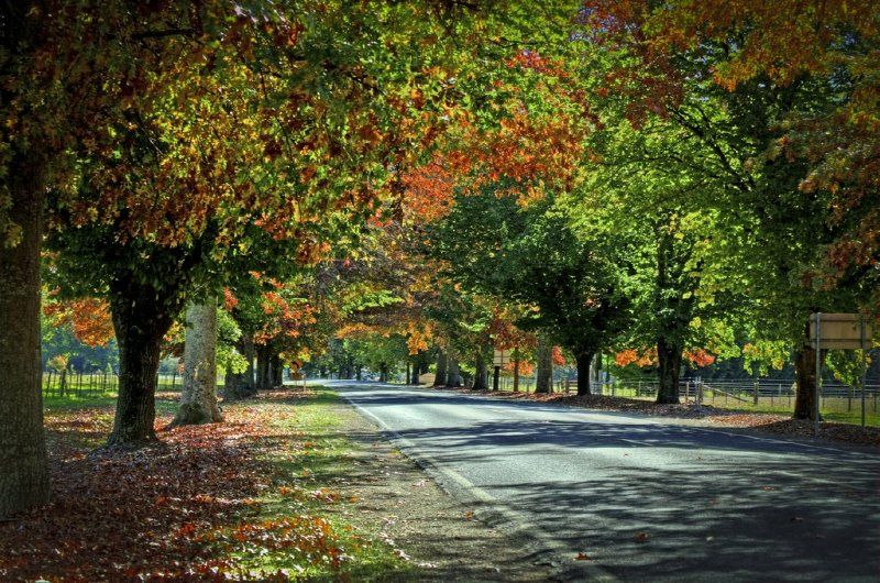 Autum Roads