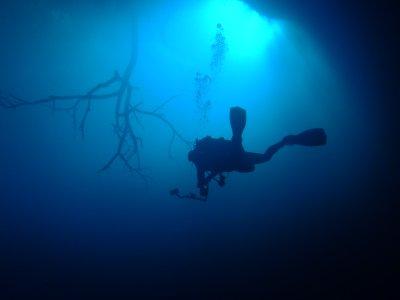 2__Cenotes..um__033.jpg