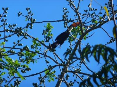 Pantanal_010.jpg