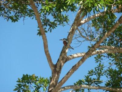 Pantanal_065.jpg