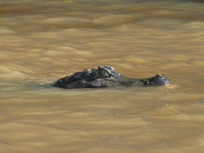 Pantanal_070.jpg