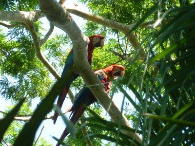 Pantanal 145