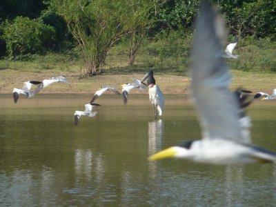 Pantanal_168.jpg