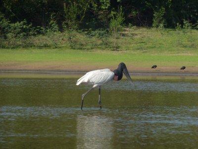 Pantanal_172.jpg