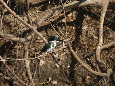Pantanal_184.jpg