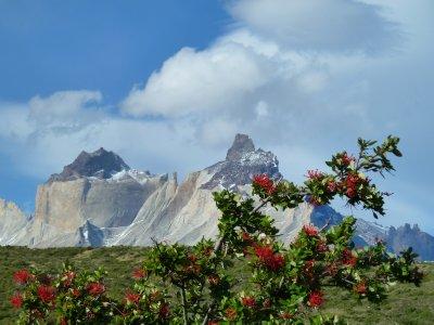 Torres del Paine 083