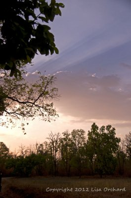 Sunrise in Bandhavgarh