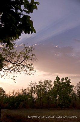 Sunrise in Bandhavgarh