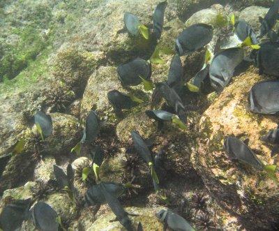 School of fab fish