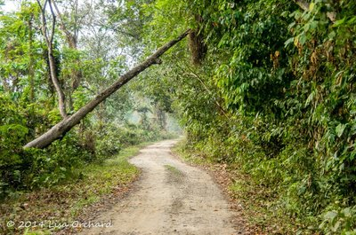 One of the more easy trails in the Gibbon Sanctuary