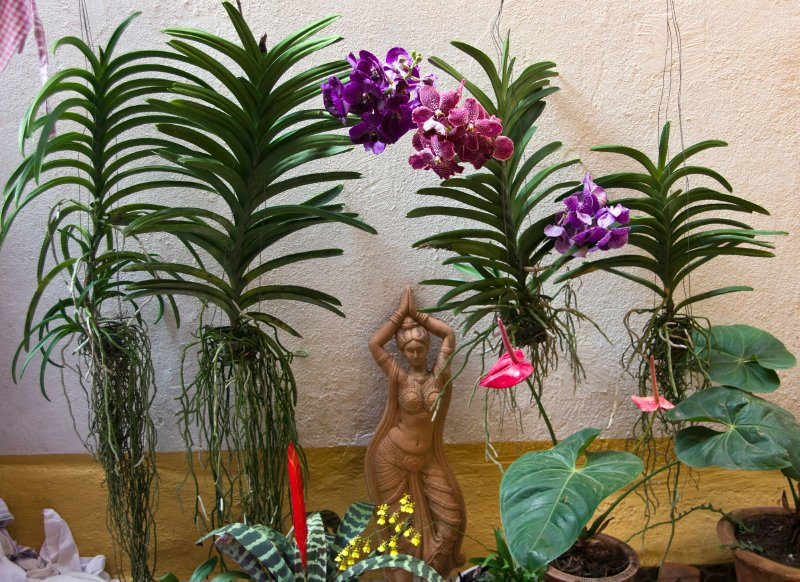 Lovely orchid garden in our Panaji Homestay