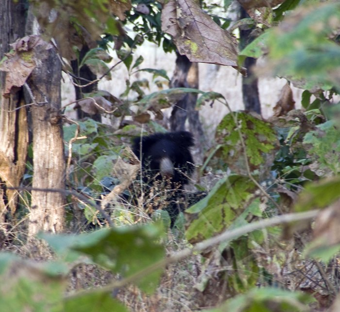 Mama bear watching us from the safety of the forest.
