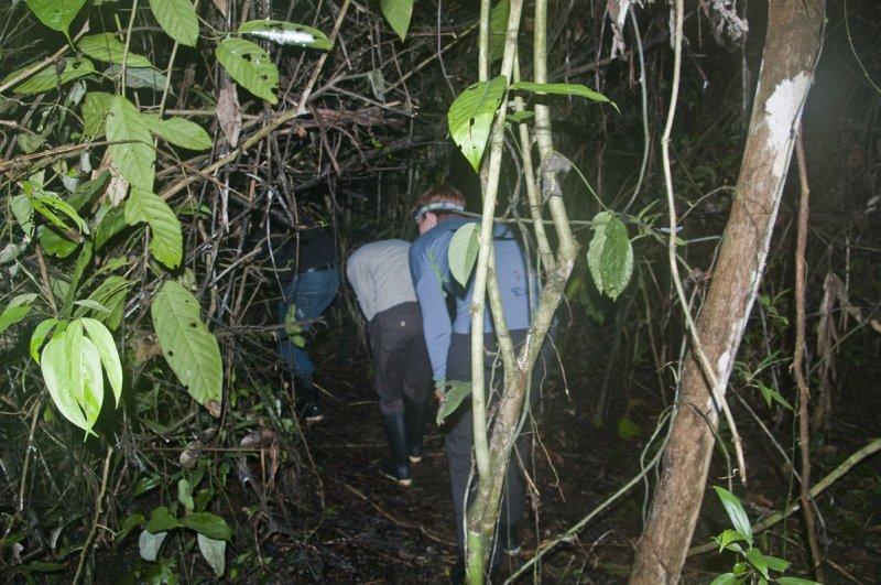 Night hike through the rainforest