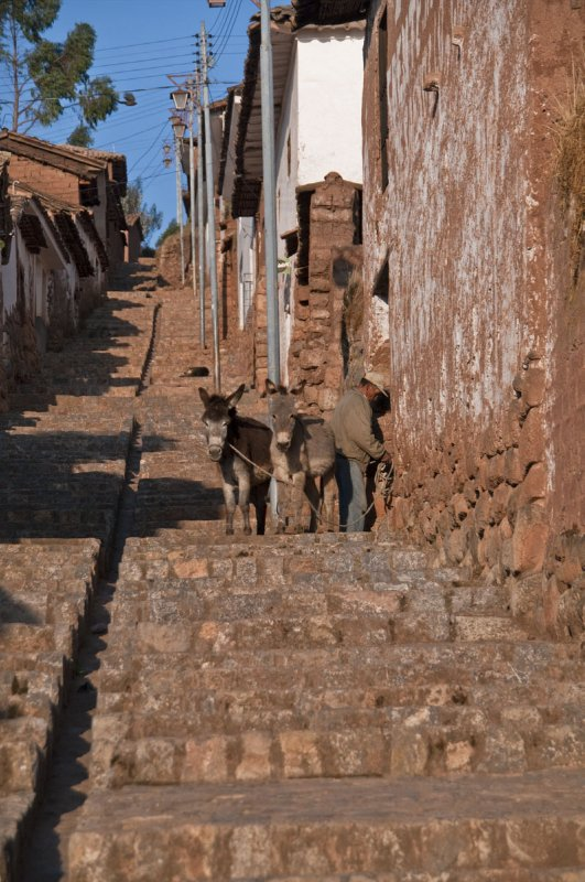 Donkeys going out for the day in Chinchero