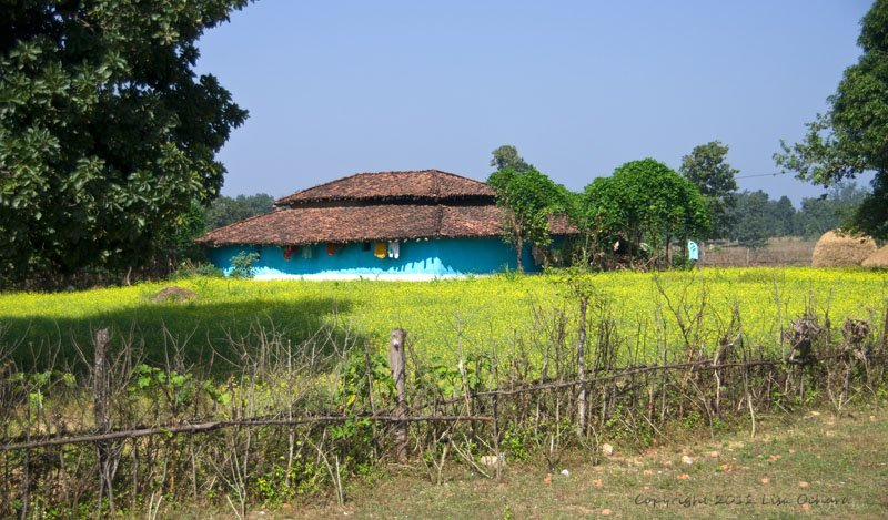 The mustard fields, and brilliant blue-painted village houses were wonderful at this time of year