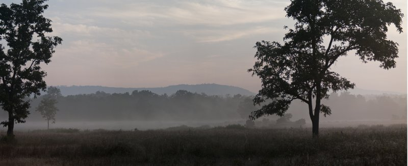 Misty morning in Kanha