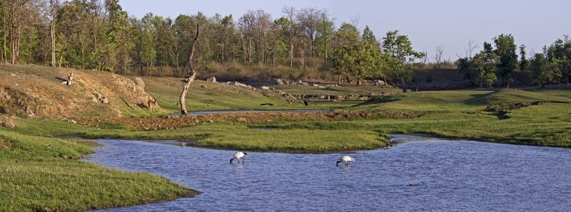 Pench pond filled with wildlife