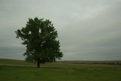 Lonely Prairie Tree