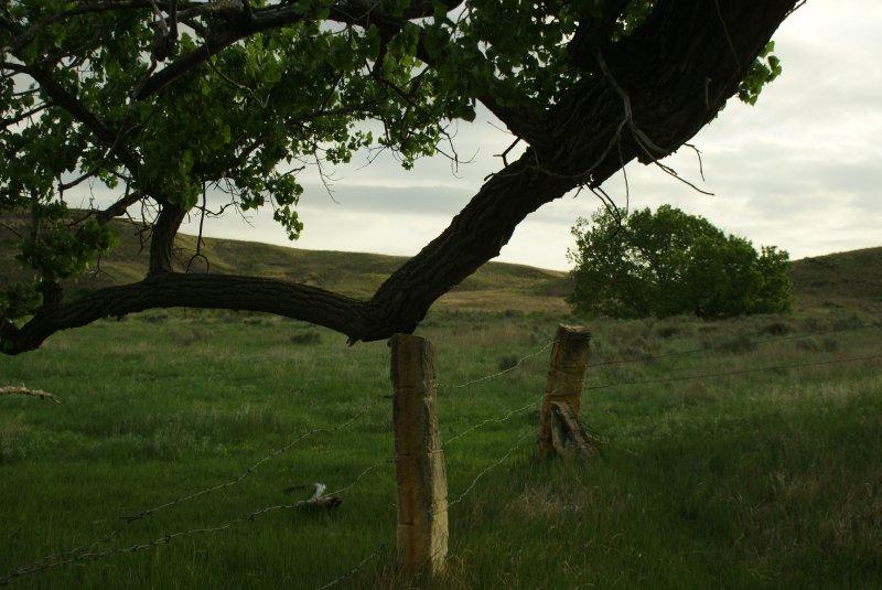 Post Rock Fence in Little Basin