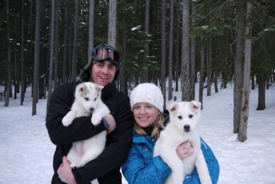 Dog sledding puppies!