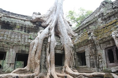 Roots of trees growing through the ruins of Ta Phrom