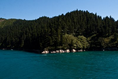 Cook Strait-14