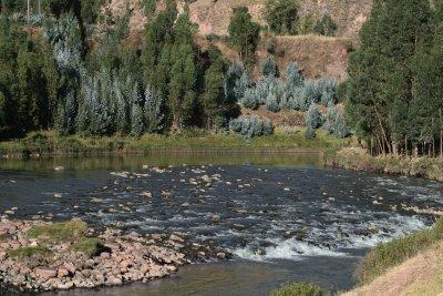 Shallow Rapids