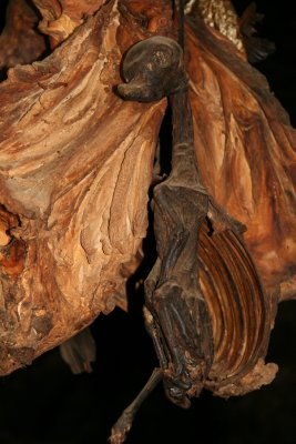 Dried Llama Fetus