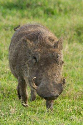 2013-03-12.._-_Warthogs.jpg