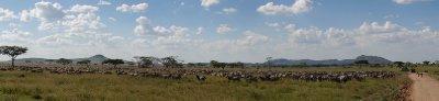 2013-03-15 - Tanzania - 3 - Serengeti - (8) - Migration