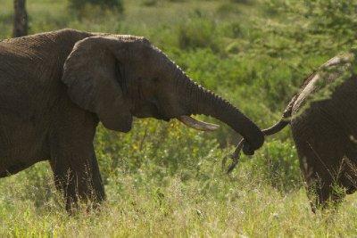 2013-03-15 - Tanzania - 3 - Serengeti - (225) - Elephants