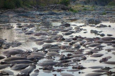 2013-03-16 - Tanzania - Serengeti - 3 - PM Safari Drive - (169) - Hippopotamus