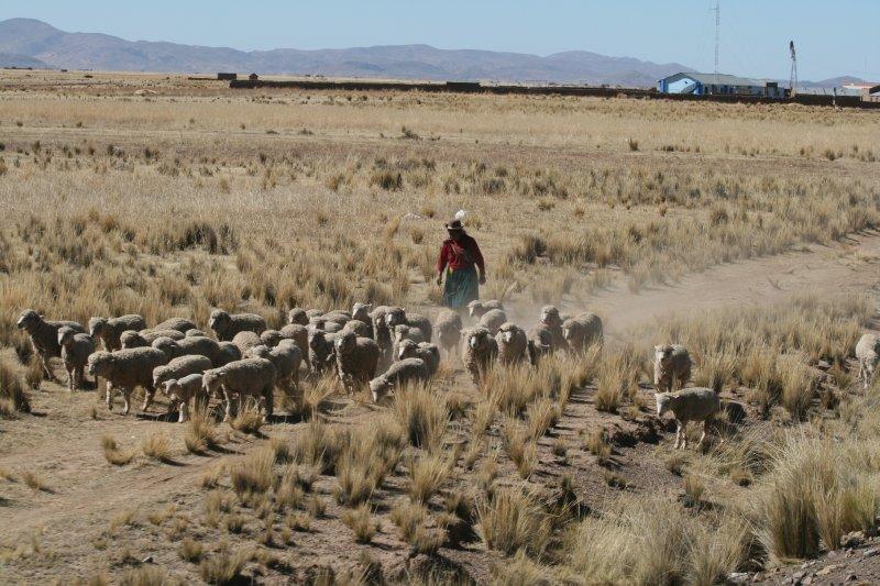 Shepherd Lady