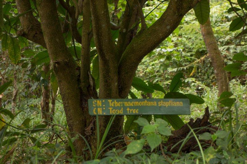 2013-03-11 - Tanzania - 1 - Kilimanjaro Day 8 - (115)