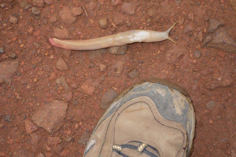 2013-03-11 - Tanzania - 1 - Kilimanjaro Day 8 - (124)