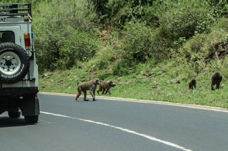 large_2013-03-12..__-_Baboons.jpg