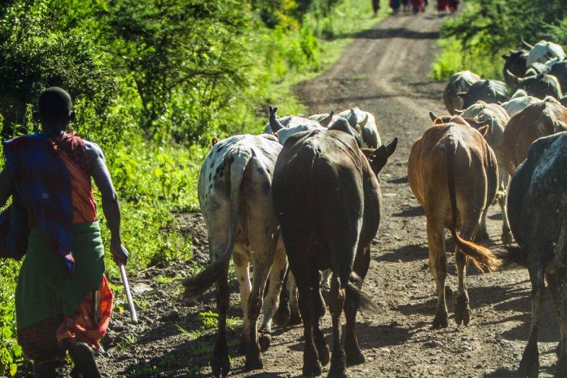 2013-03-15 - Tanzania - 1 - Ubuntu - (21) - Maasai Herders