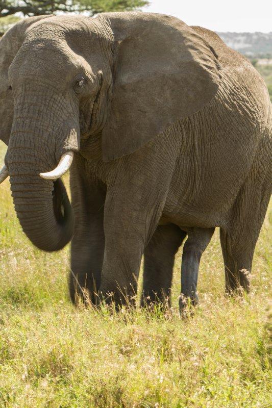 large_2013-03-16.._-_Elephant.jpg