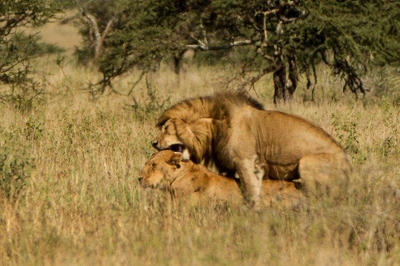 Little Lions dick one lucky bastard!