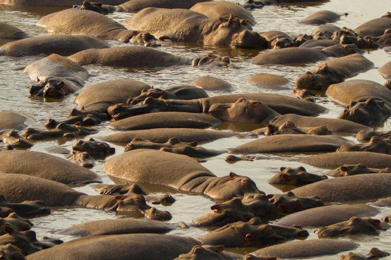 2013-03-16 - Tanzania - Serengeti - 3 - PM Safari Drive - (139) - Hippopotamus