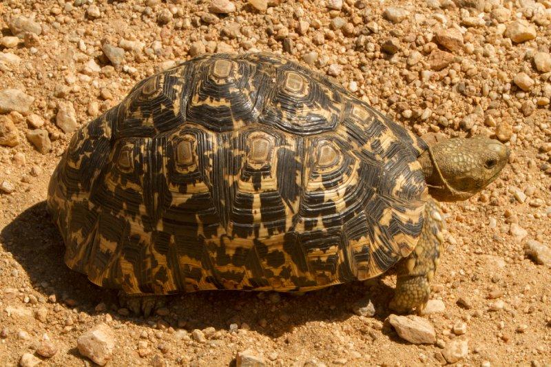large_2013-03-16..rd_Tortoise.jpg