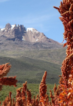 large_red-quinoa-scenic-310x450.jpg