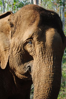 Elephant at EVP