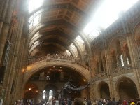 Replica dinosaur skeleton in the main hall of the Natural History Museum.
