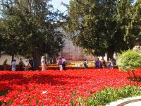 A sea of red tulips in the gardens of Topkapi Palace in Istanbul.